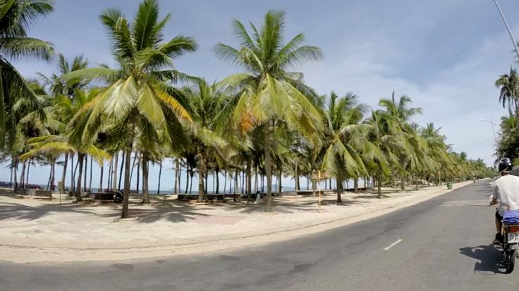Verscholen achter wat palmbomen